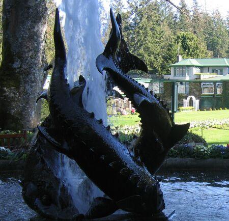 butchart gardens fish fountain