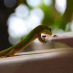 Le Gecko a faim